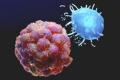 نوع شائع من الخضار يمكنه الحد من خطر الإصابة بسرطانات معينة!