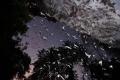 الكهوف التايلندية تجذب ملايين الخفافيش.. والعلماء أيضا