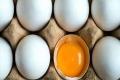 6 أسباب تجعل البيض أكثر غذاء صحي على كوكب الأرض