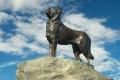 نصب تذكاري تكريما لكلبة انتظرت صاحبها 12 عاما!