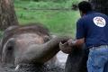 """""""الفيل الأكثر وحدة في العالم"""" يعانق """"الحرية"""" ويحظى بحياة جديدة.. بعد 35 سنة من المعاناة ..."""