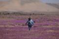 """ظاهرة """"ازدهار الصحراء"""" تلوّن أكثر مناطق العالم جفافاً"""