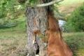 أمر يثير التعجب والتساؤل: شجرة غريبة تأكل حصان!؟!؟ ... شاهد الصور
