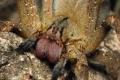 ينهي حياة الإنسان بساعتين.. العثور على أخطر نوع من العنكبوت في الموز