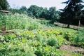 التنويع الزراعي: ركن أساسي في الزراعات البيئية