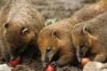من أفضل صور الحيوانات لـ2012.. القوطي يأكل البيض