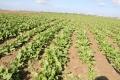 الحرب الكيميائية الإسرائيلية ضد المزارعين في غزة