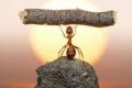 حقائق غريبة قد لا تعرفها عن عالم النمل.. عددها يصل الى 10 كوادريليون نملة