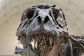 """في مشهد دراماتيكي... الصخور تحتفظ بلحظة ابتلاع """"إكثيوصور"""" لسحلية قبل 240 مليون عام... صور"""