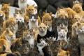 6 مناطق حول العالم استعمرتها القطط وجعلتها موطنًا لها