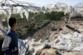 خسائر بالملايين للمزارعين الفلسطينيين بسبب الرياح العاتية الأخيرة