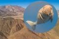 """""""بقرة بحر"""" تثبت أن صحراء مصر كانت مغمورة بالمياه"""