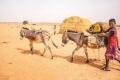 موريتانيا.. بلد يمتلك الثروات وثلث سكانه فقراء