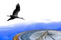 """للطيران لمسافات طويلة.. الطيور تستخدم نظام """"جي بي إس"""" طبيعي"""
