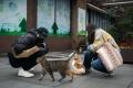 """الكشف عن إصابة قطط """"ووهان"""" الصينية بكورونا.. ماذا يعني ذلك؟"""