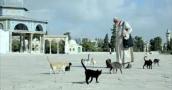 """من يطعم طيور الأقصى وقططه بعد اليوم؟.. الموت يُغيّب """"أبو هريرات الأقصى"""""""