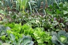 أزمة كورونا تكشف مدى الحاجة لإحياء الزراعة والصناعة المحلية بهدف ...