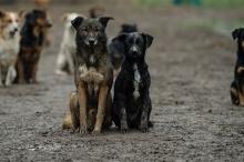 لهذا السبب أصبحت الكلاب صديقة للإنسان على عكس الذئاب