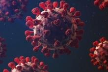 فيروس كورونا: ما الذي يجعله قاتلا؟