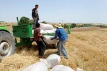 """زراعة مهمشة وإنفاق بالقطّارة...واقعٌ يُناقض """"السيادة على الغذاء"""""""