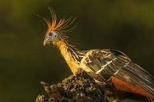 أكثر 10 حيوانات غريبة تثير اهتمام العلماء