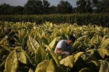 """شركة """"سجائر"""" تعلن الاقتراب من إنتاج لقاح ضد كورونا"""
