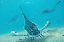 كان بعضها أكبر من البشر.. عقارب بحرية عملاقة في محيطات ...