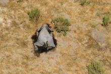 موت جماعي غامض لأكثر من 350 فيلاً في إفريقيا يثير ...