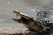 حمار الوحش يفر من قبضة تمساحين بأعجوبة... فيديو