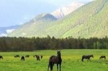 لا يغوينك الحجم... حصان خشبي صغير يرعب خيول ويدفعها للتراجع... ...