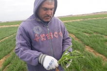 إغراق شرق غزة بالمياه والمبيدات... سلاح إسرائيل الجديد ضد الفلسطينيين ...