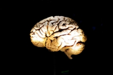 حل لغز نسيج دماغ بشري ظل سليما لمدة 2600 سنة