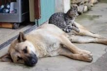 4 أفعال وحشية ارتكبها البشر بحق الحيوانات على مر التاريخ