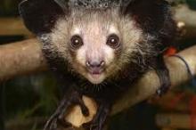 61 حيوانًا من أغرب الكائنات على الأرض