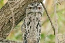 """رغم قبحه.. دراسة علمية حديثة تؤكد: طائر """"فم الضفدع"""" هو ..."""