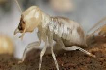 """""""النمل الأبيض الأكثر ضررا"""" في العالم يغزو اسرائيل"""