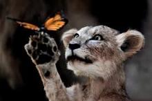 عرض مُبهر.. مقاطع تشاهد من خلالها أثر التطور في الكائنات ...