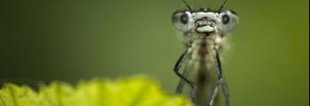 ماذا سيحدث في حال اختفاء كافة الحشرات من عالمنا؟؟