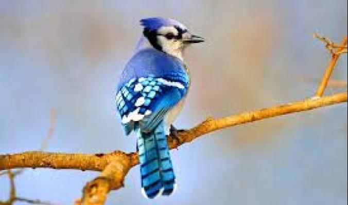لماذا يندر وجود اللون الأزرق في الطبيعة؟