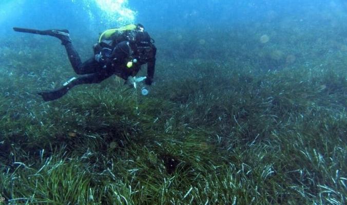 """""""بوسيدونيا"""".. كنز بيئي ورئة الأرض الغارقة في الأعماق"""