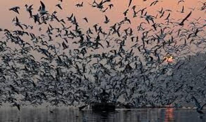 أكبر دراسة من نوعها.. ما يقرب من 50 مليار طائر بري تعيش على وجه الأرض