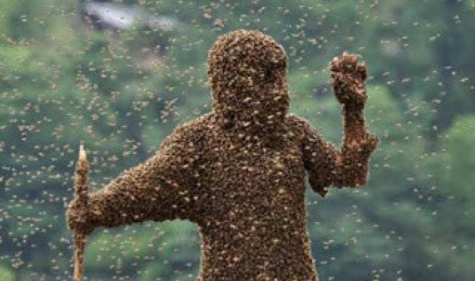 من هو الصحابي الذي حمى الله جسده بجيش من النحل؟