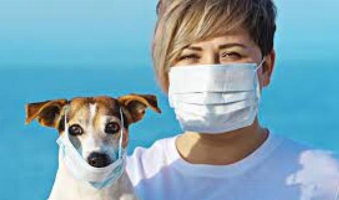 10 أمراض فتاكة انتقلت من الحيوان إلى الإنسان!