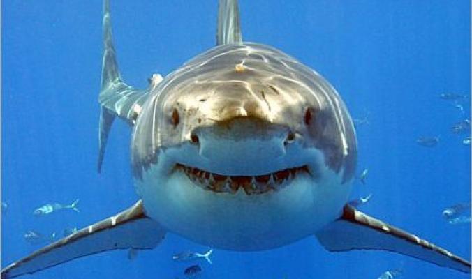 سمك القرش يضرب قلب السياحة المصرية بمَقتل!