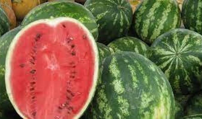 أصله ليس من جنوب إفريقيا كما ظن العلماء.. مقابر سقارة تكشف سراً عن البطيخ