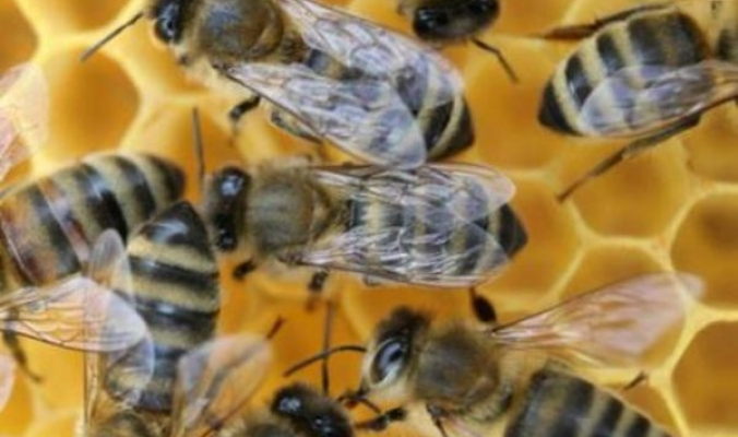 النحل في جميع أنحاء العالم يعيش حالة من النفوق الجماعي