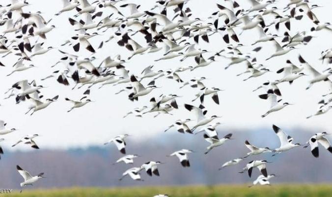 """التغير المناخي والطيور.. دراسة تكشف """"تطورا مثيرا للدهشة"""""""
