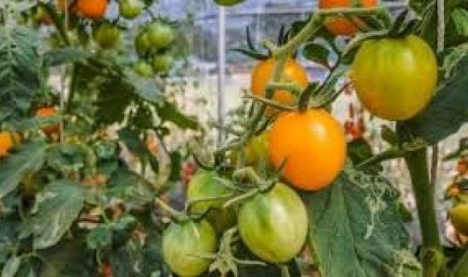 نصف مساحة الأردن وناتج زراعي يفوق 100 مليار دولار.. كيف أصبحت هولندا ثاني أكبر مُصَدِّر زراعي في العالم؟