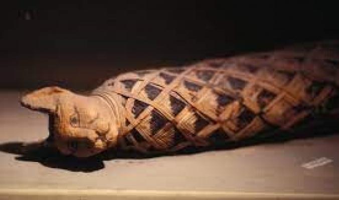 لماذا كان قدماء المصريين مهووسين بالقطط إلى هذا الحد؟