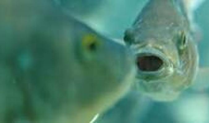 صراع من عالم آخر...هجوم متبادل بين كلب وسمك عبر زجاج حوض مائي..فيديو